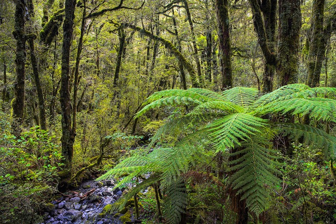 0020 Fiordland National Park, South Island, New Zealand