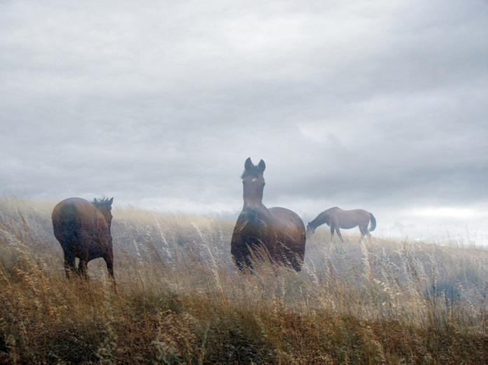 0463 horses in the mist