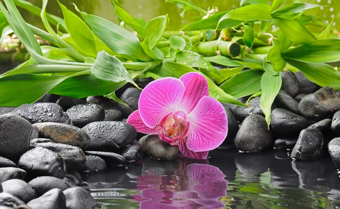 492 Orchid reflecting.jpg